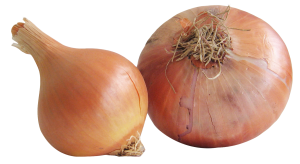 Onion-PNG-Image1